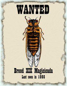 Wanted cicadas
